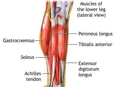 ízületi fájdalom a láb felett felülről)